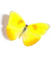 Imagem de avatar das estrelinhas